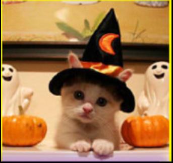 Halloweencat.png