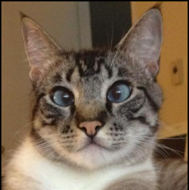 Cross eyed cat.png