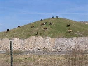 Cows Far.jpeg