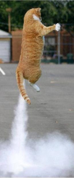 Rocket Cat.png