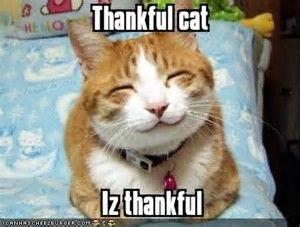 Thanks Cat.jpeg