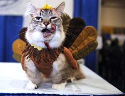 10-thanksgiving-cat.jpg