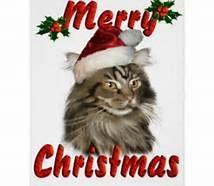 Christmas cat.jpeg