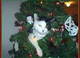 cat in  tree.jpeg