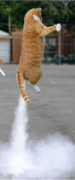 Rocket Cat.png