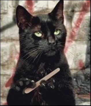 Emoryboardcat.png
