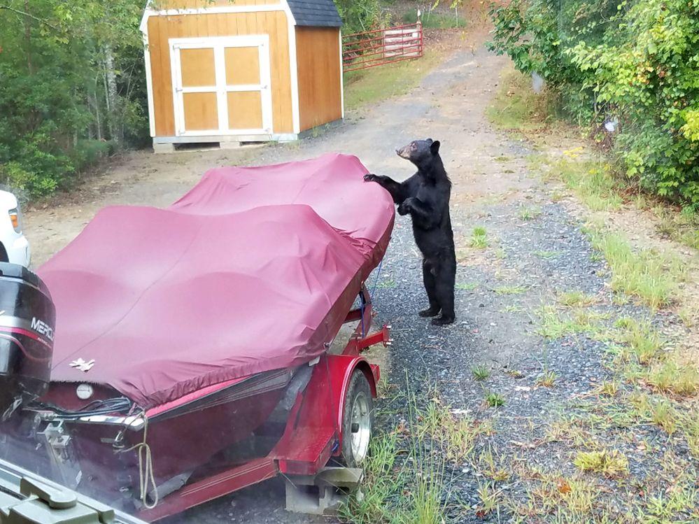 bear6_zpskjhc7wrp