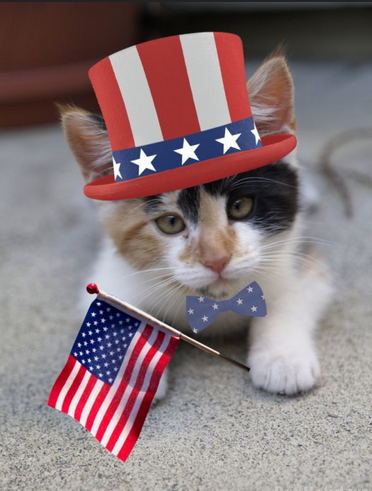 4th July Cat.png