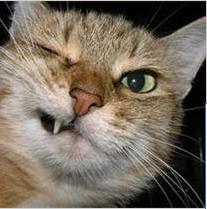 Oneyedcat.png