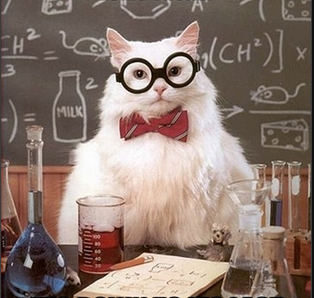 Lab Cat.png